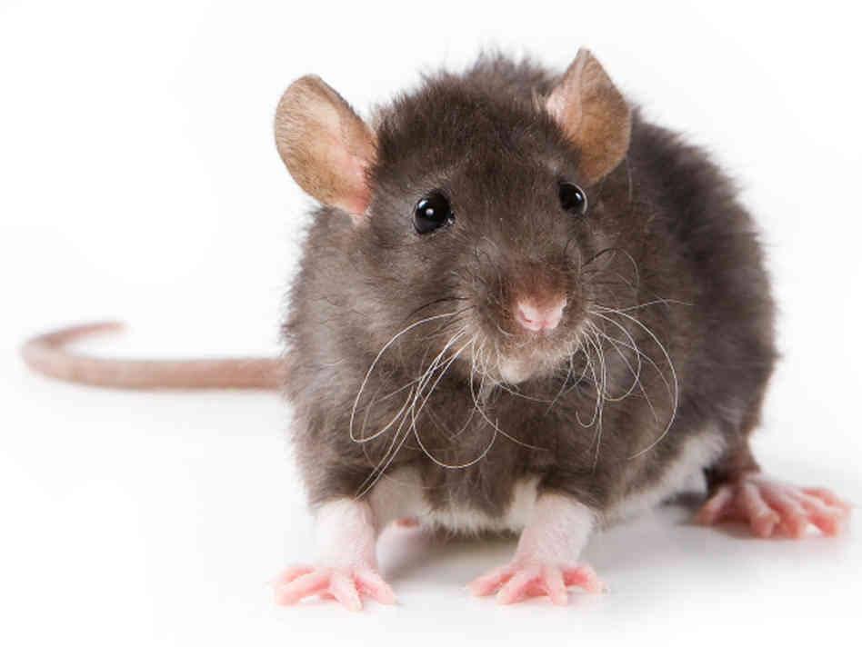 bazi-rat-hour