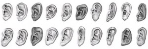 Various Types of Ear